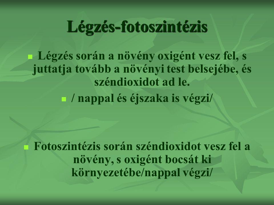 Légzés-fotoszintézis