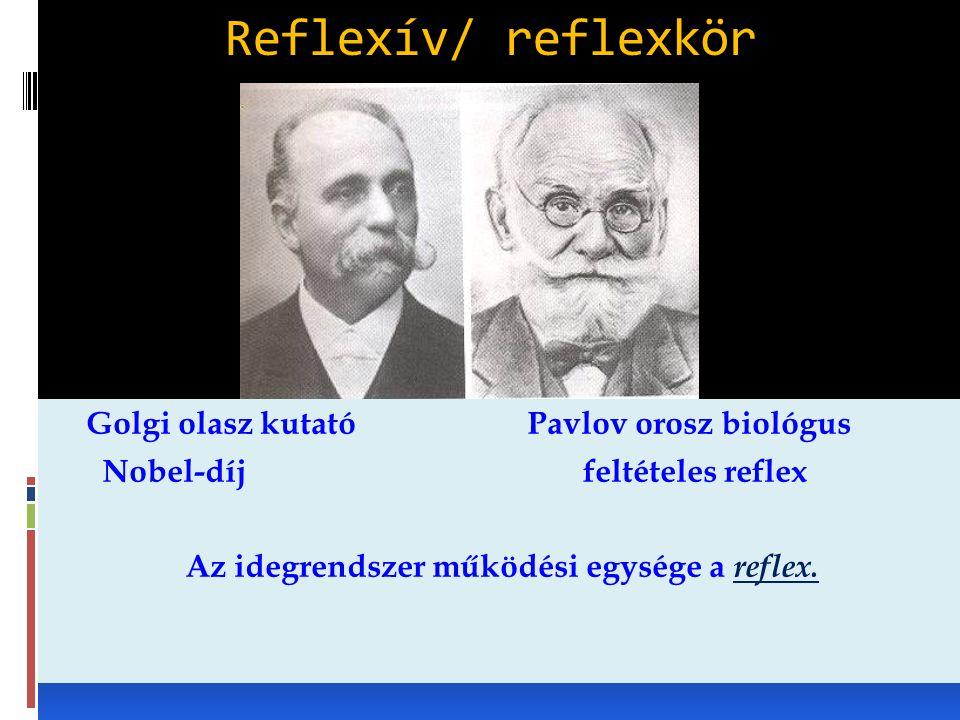 Az idegrendszer működési egysége a reflex.