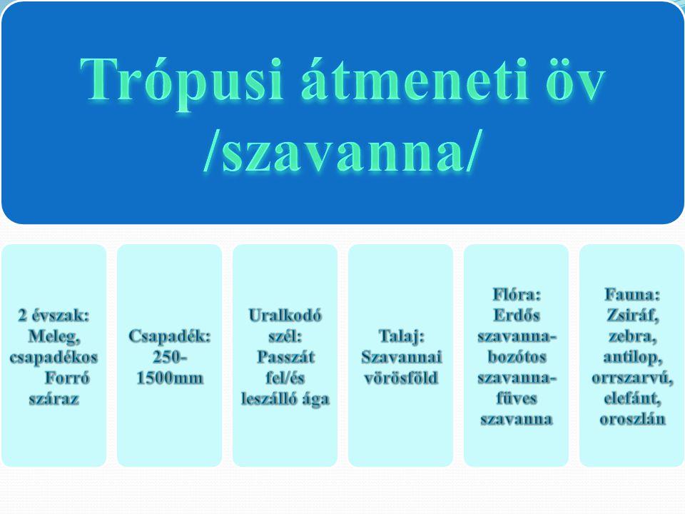 Trópusi átmeneti öv /szavanna/ 2 évszak: Meleg, csapadékos