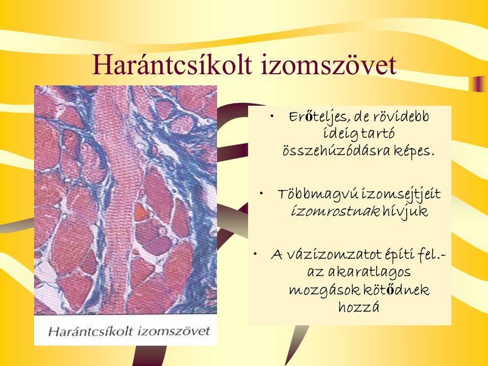 Harántcsíkolt izomszövet