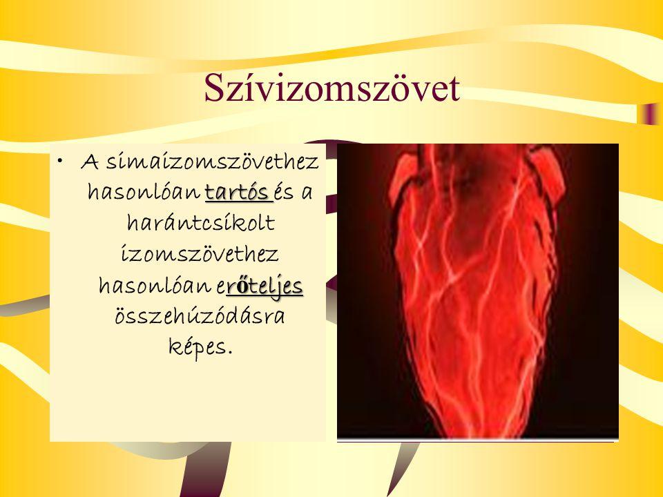 Szívizomszövet A simaizomszövethez hasonlóan tartós és a harántcsíkolt izomszövethez hasonlóan erőteljes összehúzódásra képes.