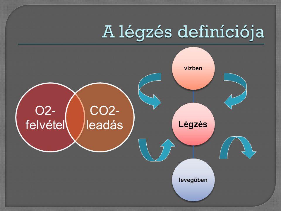 A légzés definíciója Légzés vízben levegőben O2-felvétel leadás CO2-