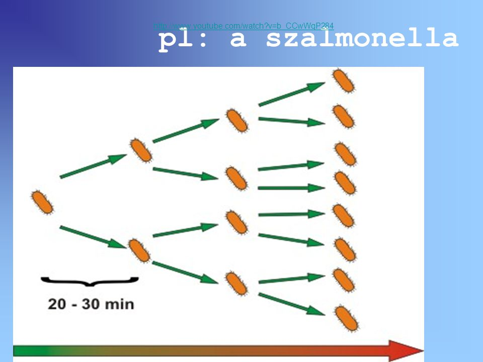 http://www.youtube.com/watch v=b_CCwWqP284 pl: a szalmonella
