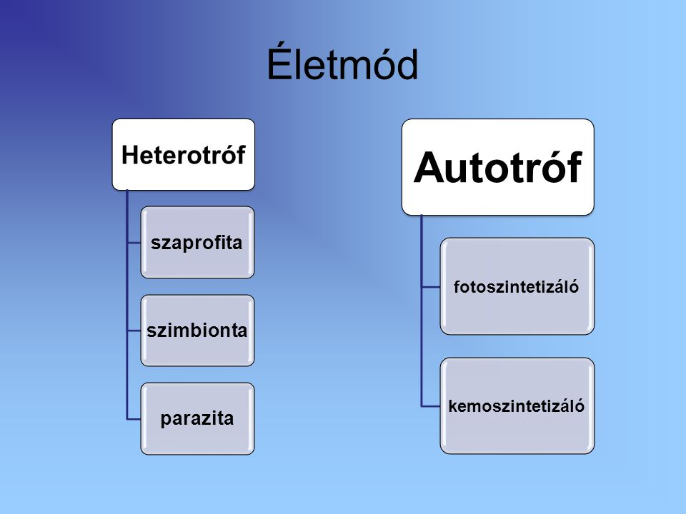 Életmód Heterotróf szaprofita szimbionta parazita Autotróf