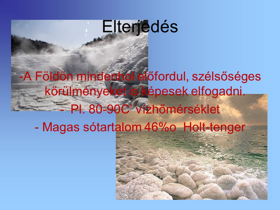 - Magas sótartalom 46%o Holt-tenger