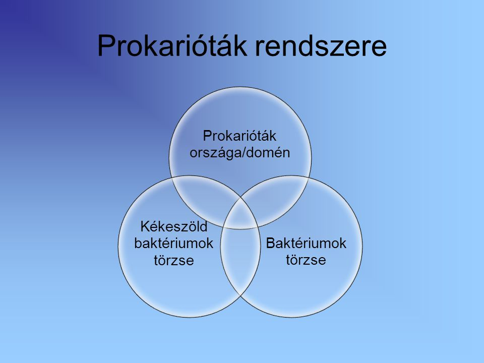 Prokarióták rendszere