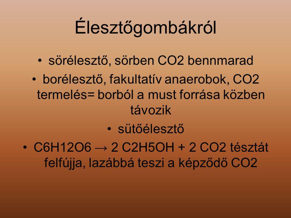 sörélesztő, sörben CO2 bennmarad