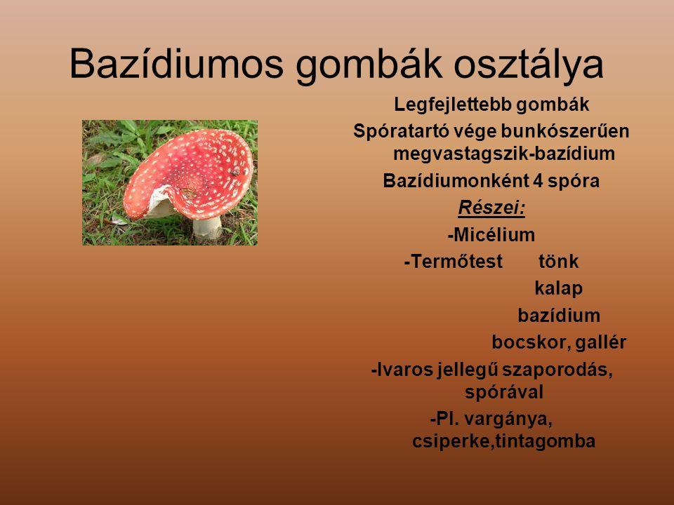 Bazídiumos gombák osztálya