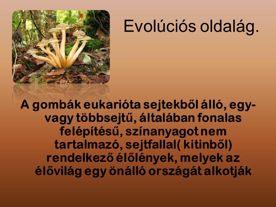 Evolúciós oldalág.