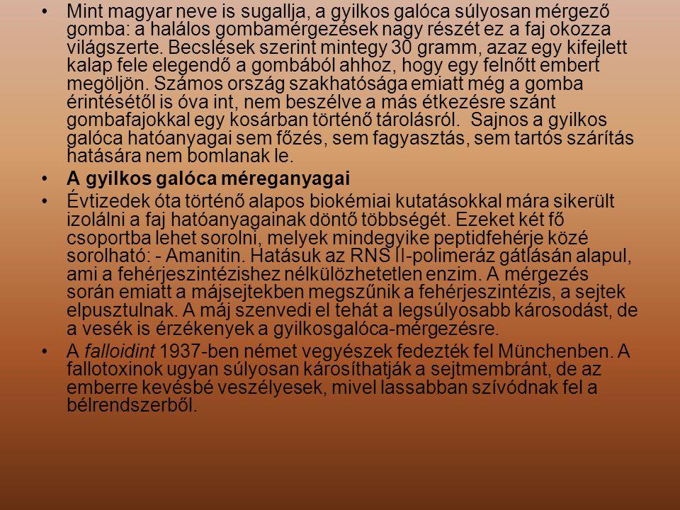 Mint magyar neve is sugallja, a gyilkos galóca súlyosan mérgező gomba: a halálos gombamérgezések nagy részét ez a faj okozza világszerte. Becslések szerint mintegy 30 gramm, azaz egy kifejlett kalap fele elegendő a gombából ahhoz, hogy egy felnőtt embert megöljön. Számos ország szakhatósága emiatt még a gomba érintésétől is óva int, nem beszélve a más étkezésre szánt gombafajokkal egy kosárban történő tárolásról. Sajnos a gyilkos galóca hatóanyagai sem főzés, sem fagyasztás, sem tartós szárítás hatására nem bomlanak le.