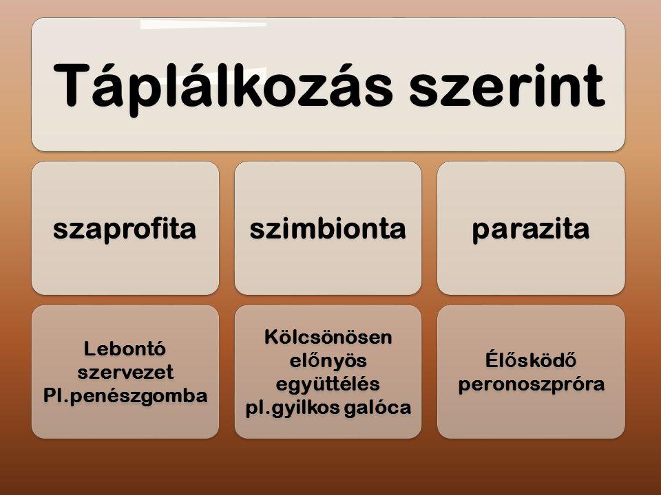Táplálkozás szerint szaprofita. Pl.penészgomba. Lebontó szervezet. szimbionta. Kölcsönösen előnyös.