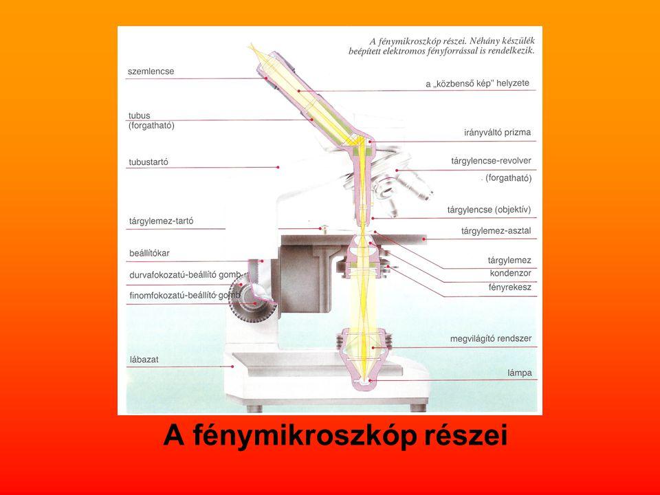 A fénymikroszkóp részei