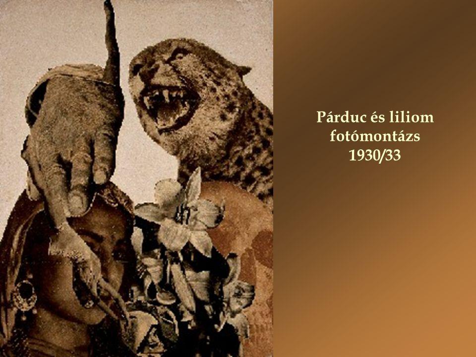 Párduc és liliom fotómontázs 1930/33