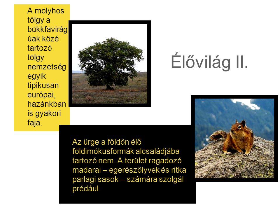 A molyhos tölgy a bükkfavirágúak közé tartozó tölgy nemzetség egyik tipikusan európai, hazánkban is gyakori faja.