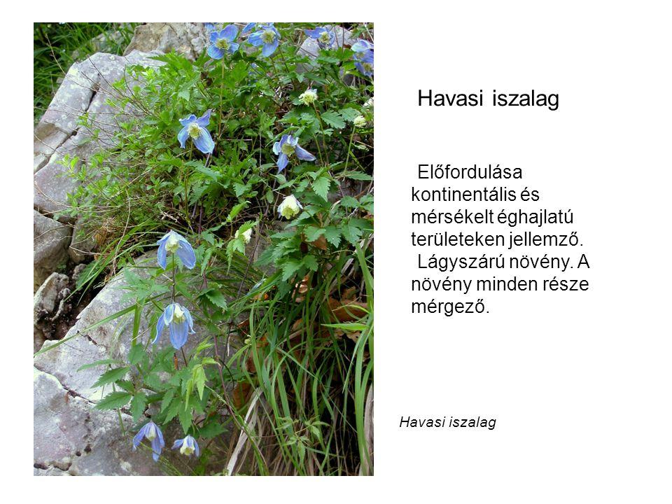Havasi iszalag Előfordulása kontinentális és mérsékelt éghajlatú területeken jellemző. Lágyszárú növény. A növény minden része mérgező.