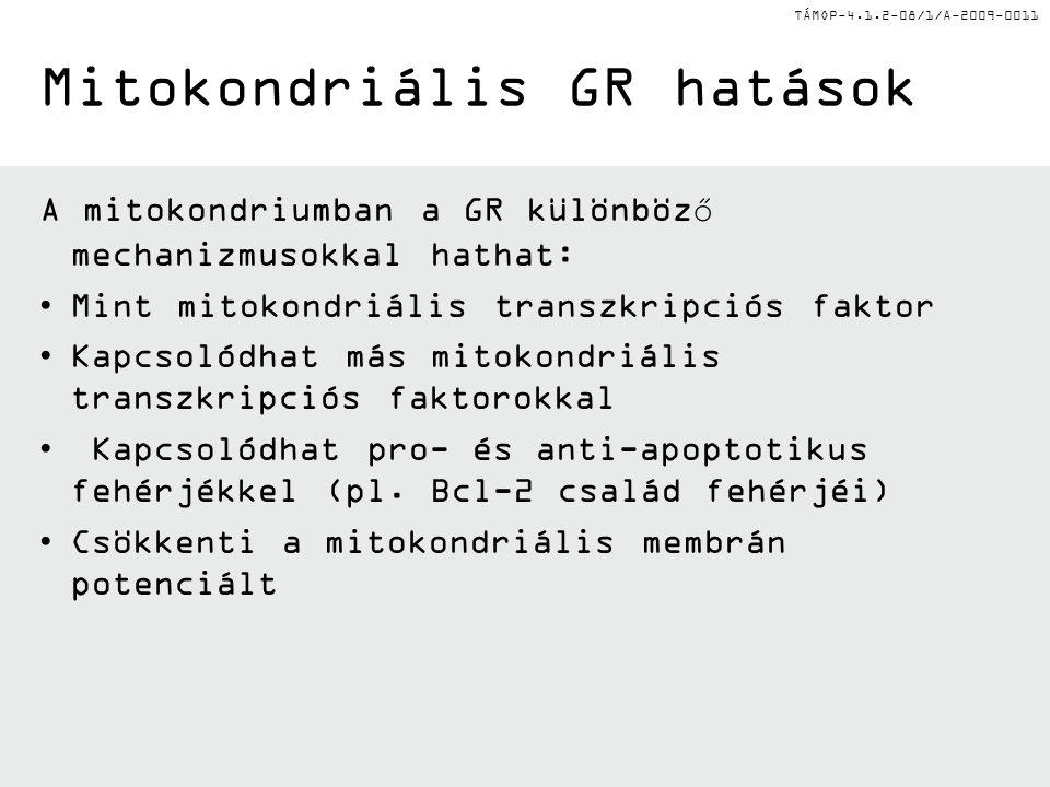 Mitokondriális GR hatások