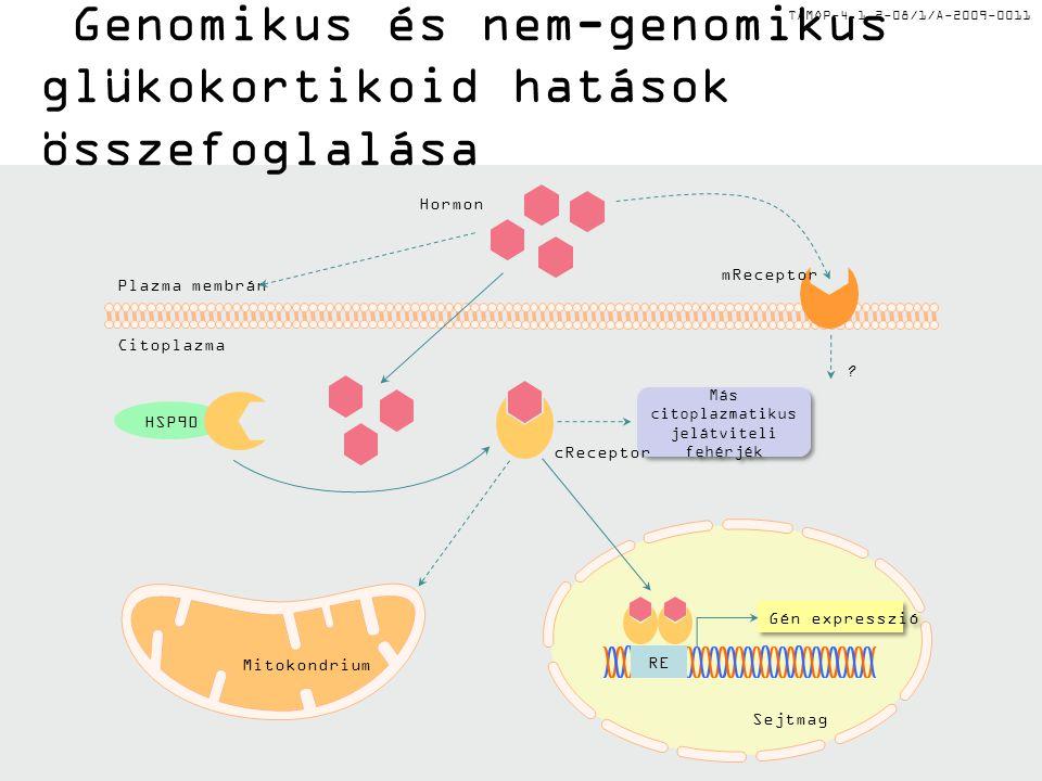 Genomikus és nem-genomikus glükokortikoid hatások összefoglalása