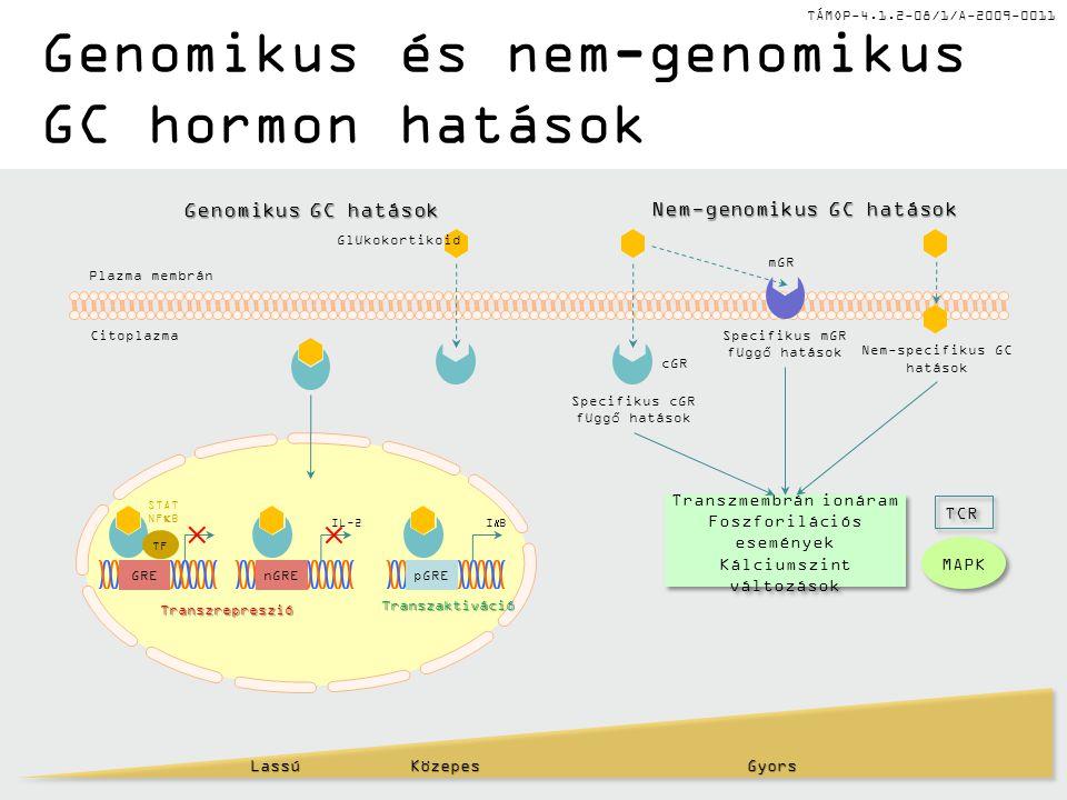 Genomikus és nem-genomikus GC hormon hatások
