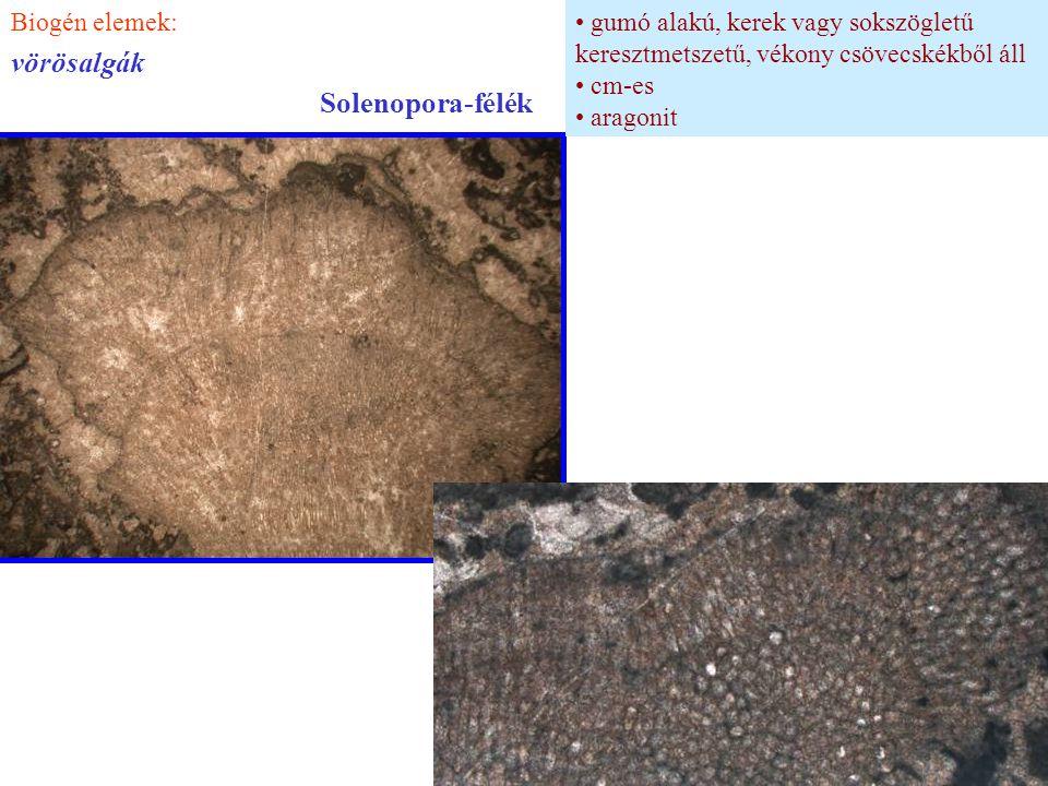 vörösalgák Solenopora-félék Biogén elemek:
