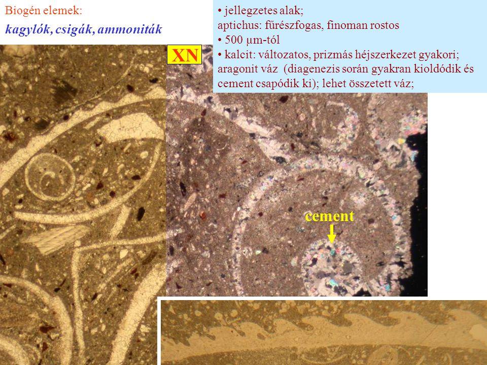 XN cement kagylók, csigák, ammoniták Biogén elemek: