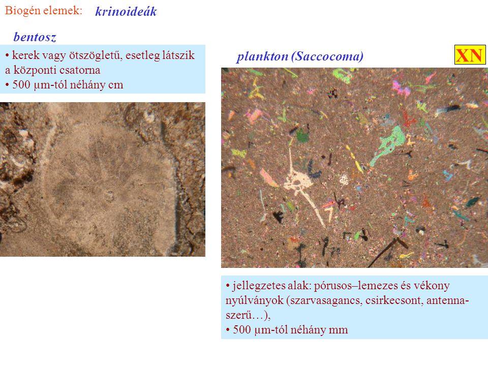 XN krinoideák bentosz plankton (Saccocoma) Biogén elemek: