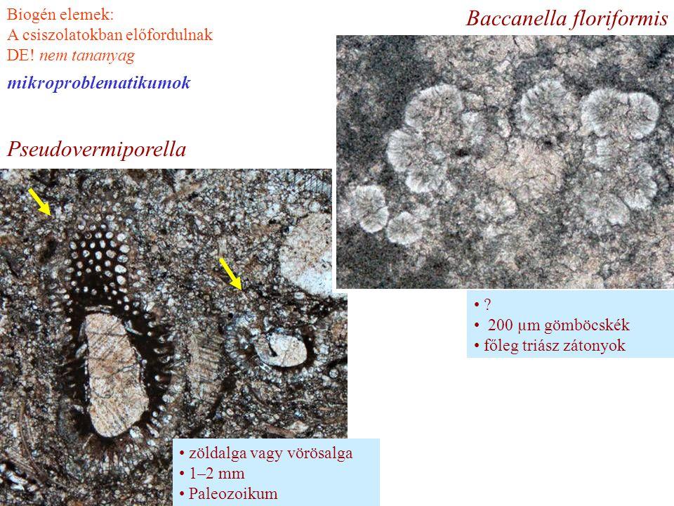 Baccanella floriformis