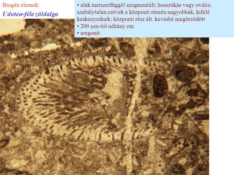 Udotea-féle zöldalga Biogén elemek: