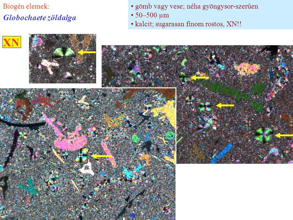 XN Globochaete zöldalga Biogén elemek: