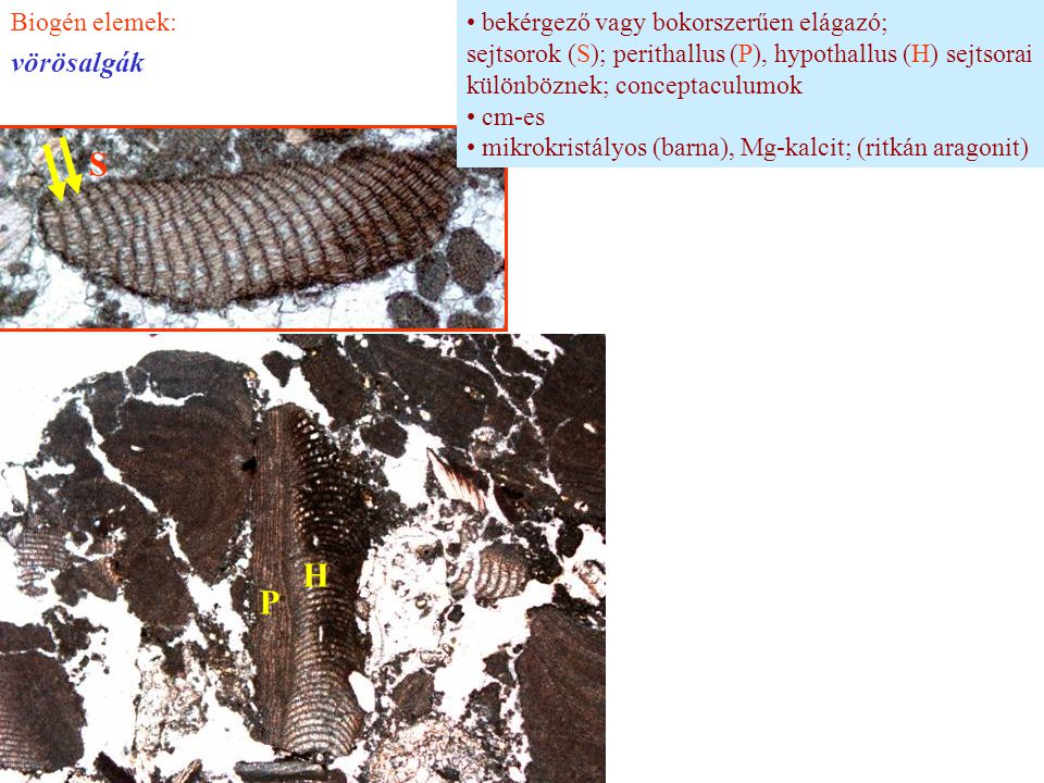 S H P vörösalgák Biogén elemek: