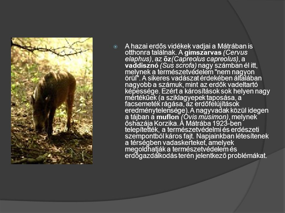 A hazai erdős vidékek vadjai a Mátrában is otthonra találnak