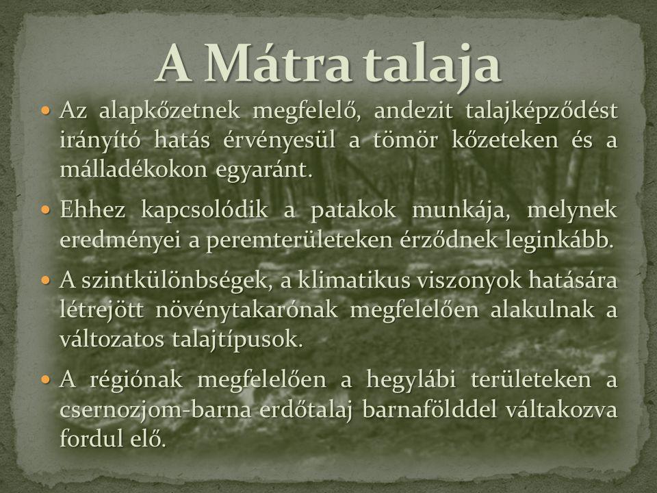 A Mátra talaja Az alapkőzetnek megfelelő, andezit talajképződést irányító hatás érvényesül a tömör kőzeteken és a málladékokon egyaránt.