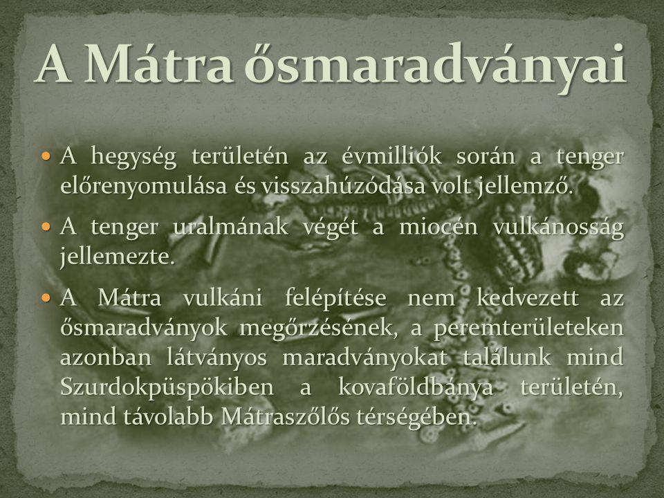 A Mátra ősmaradványai A hegység területén az évmilliók során a tenger előrenyomulása és visszahúzódása volt jellemző.