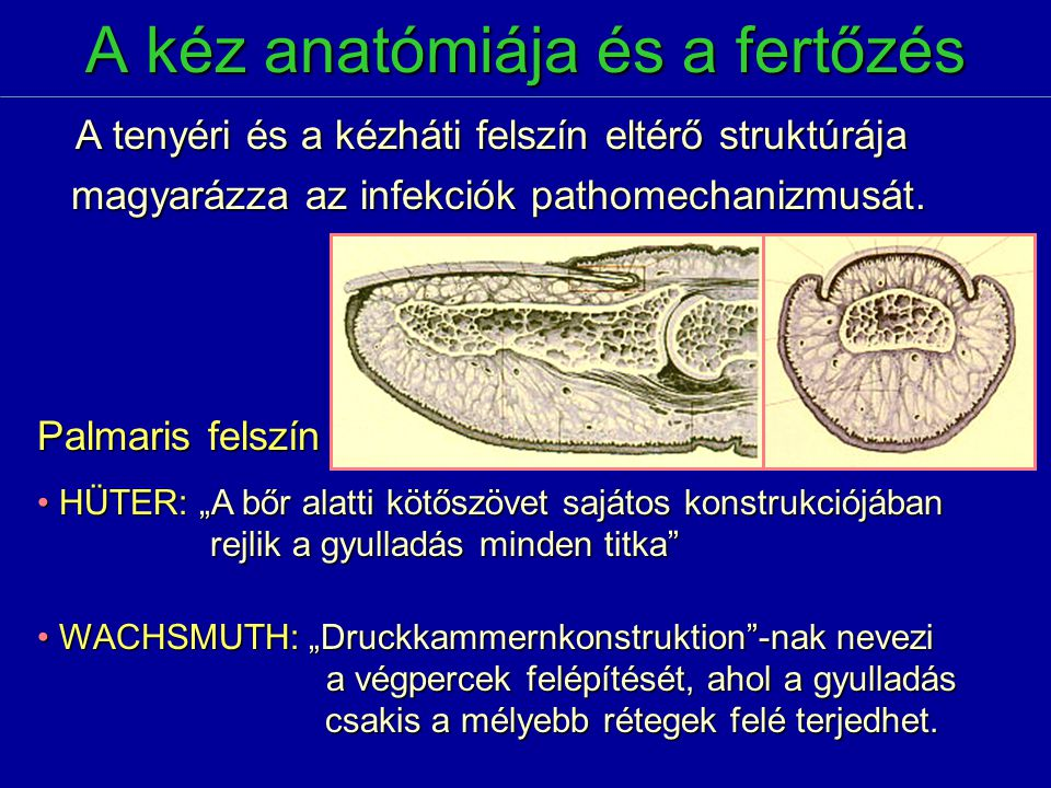 A kéz anatómiája és a fertőzés