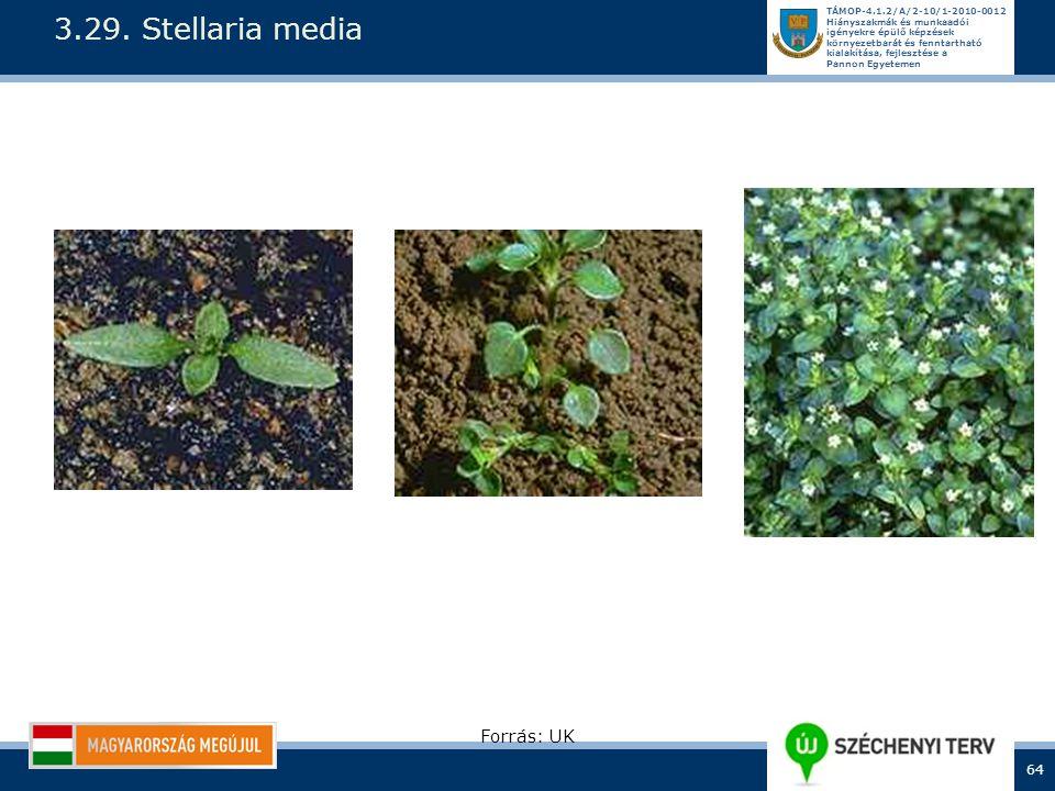 3.29. Stellaria media Forrás: UK
