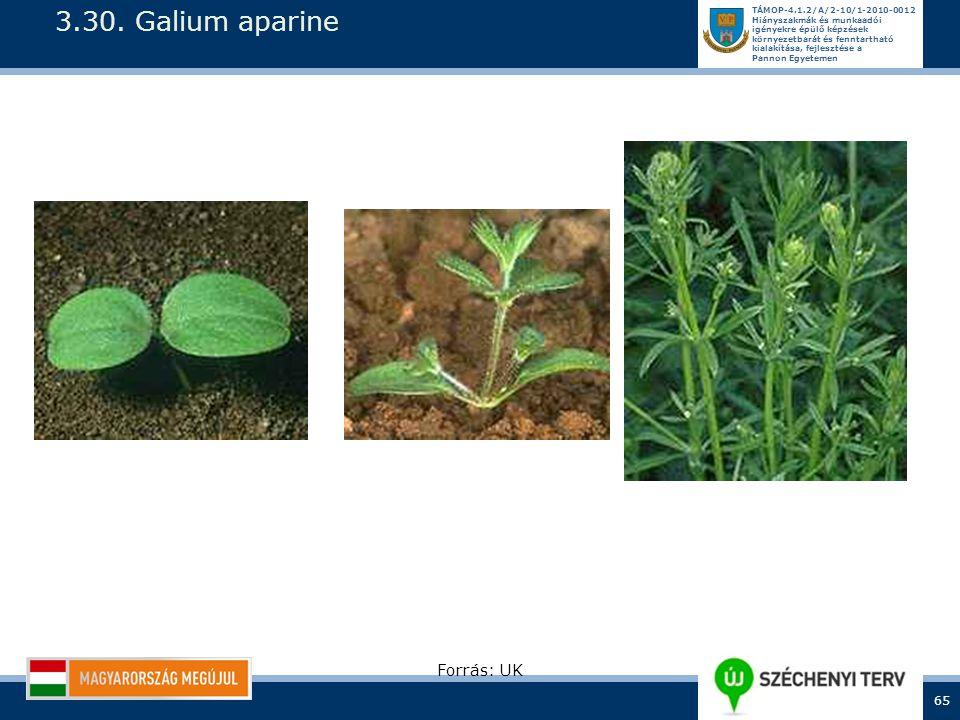 3.30. Galium aparine Forrás: UK
