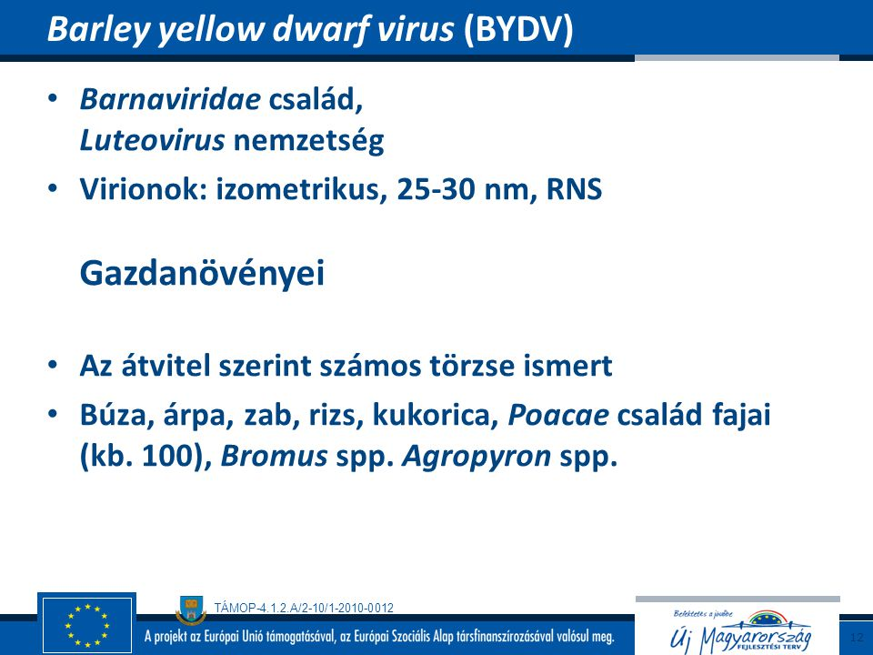 Barley yellow dwarf virus (BYDV)