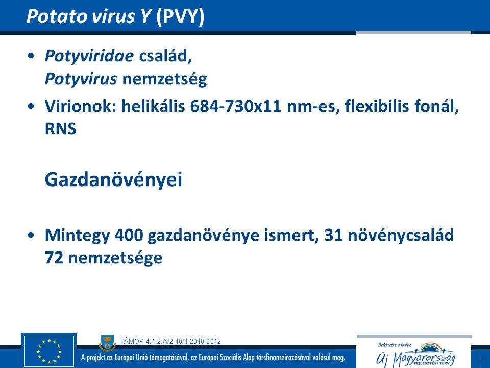 Potato virus Y (PVY) Potyviridae család, Potyvirus nemzetség