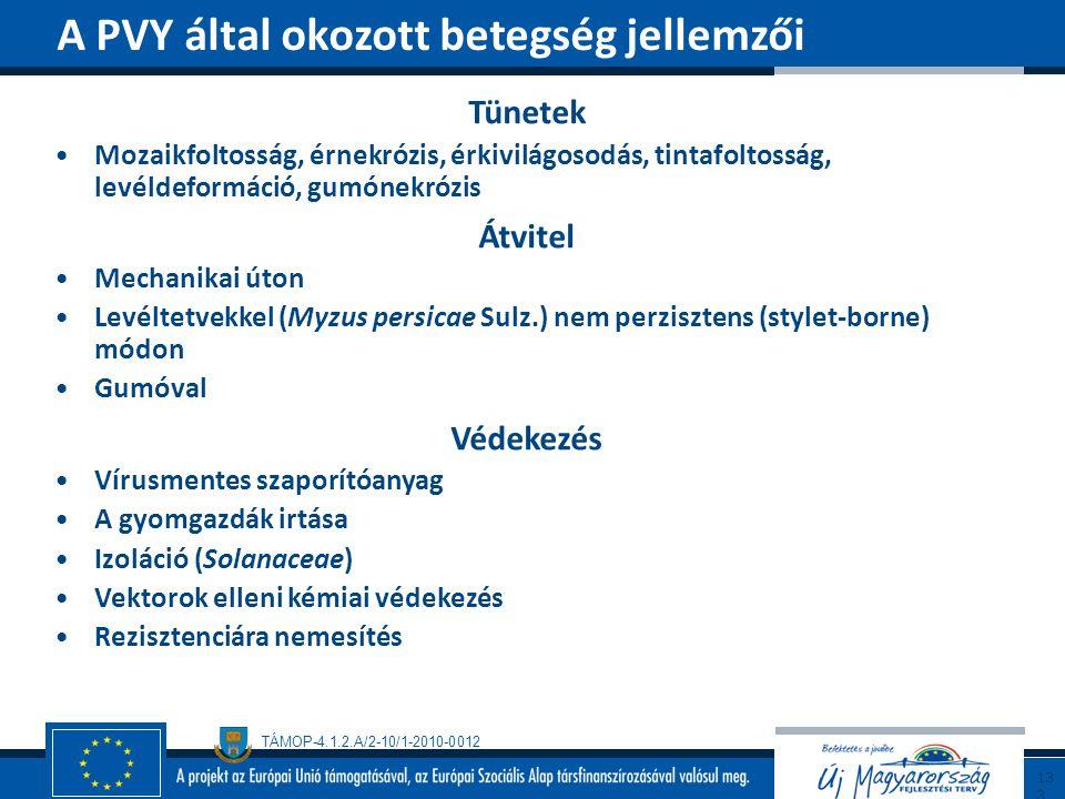 A PVY által okozott betegség jellemzői