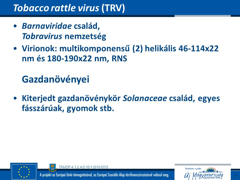 Tobacco rattle virus (TRV)