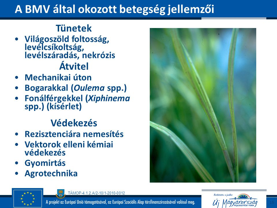 A BMV által okozott betegség jellemzői