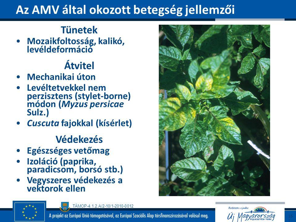 Az AMV által okozott betegség jellemzői