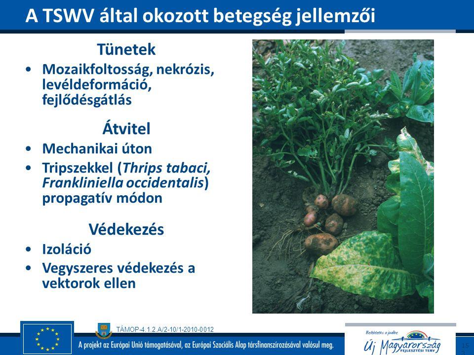 A TSWV által okozott betegség jellemzői