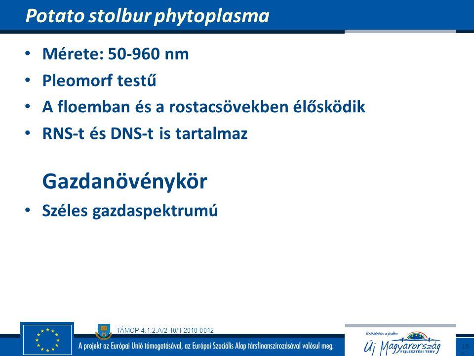Potato stolbur phytoplasma