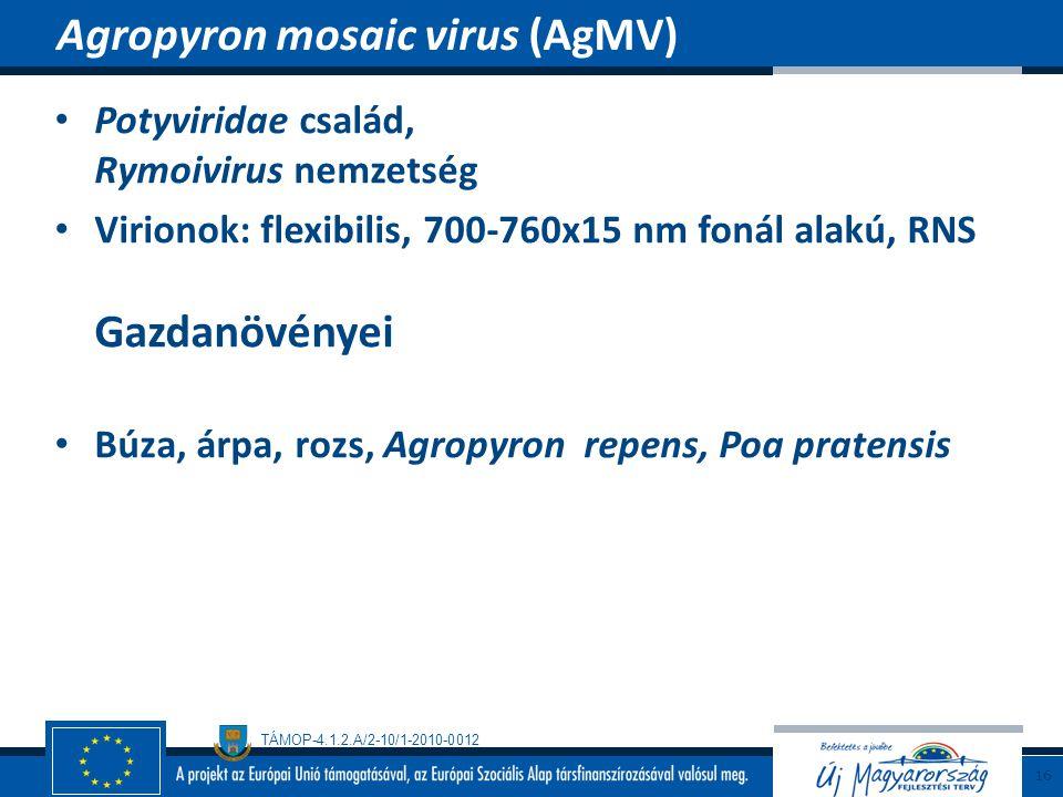 Agropyron mosaic virus (AgMV)