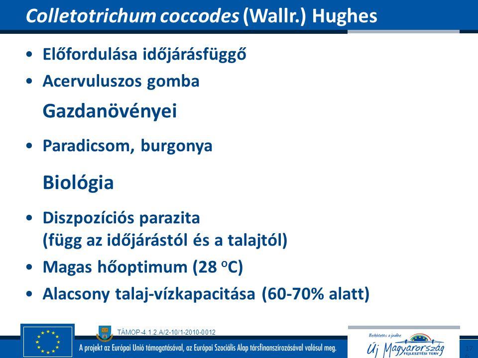 Colletotrichum coccodes (Wallr.) Hughes