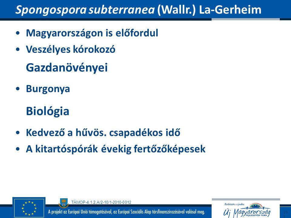 Spongospora subterranea (Wallr.) La-Gerheim
