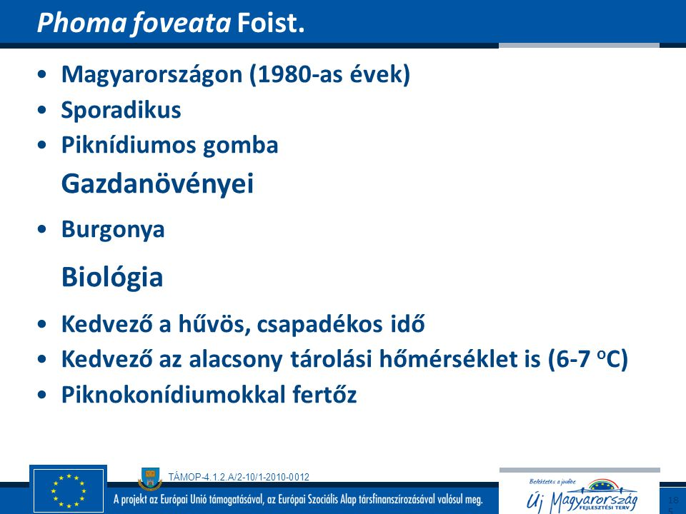 Phoma foveata Foist. Biológia Magyarországon (1980-as évek) Sporadikus