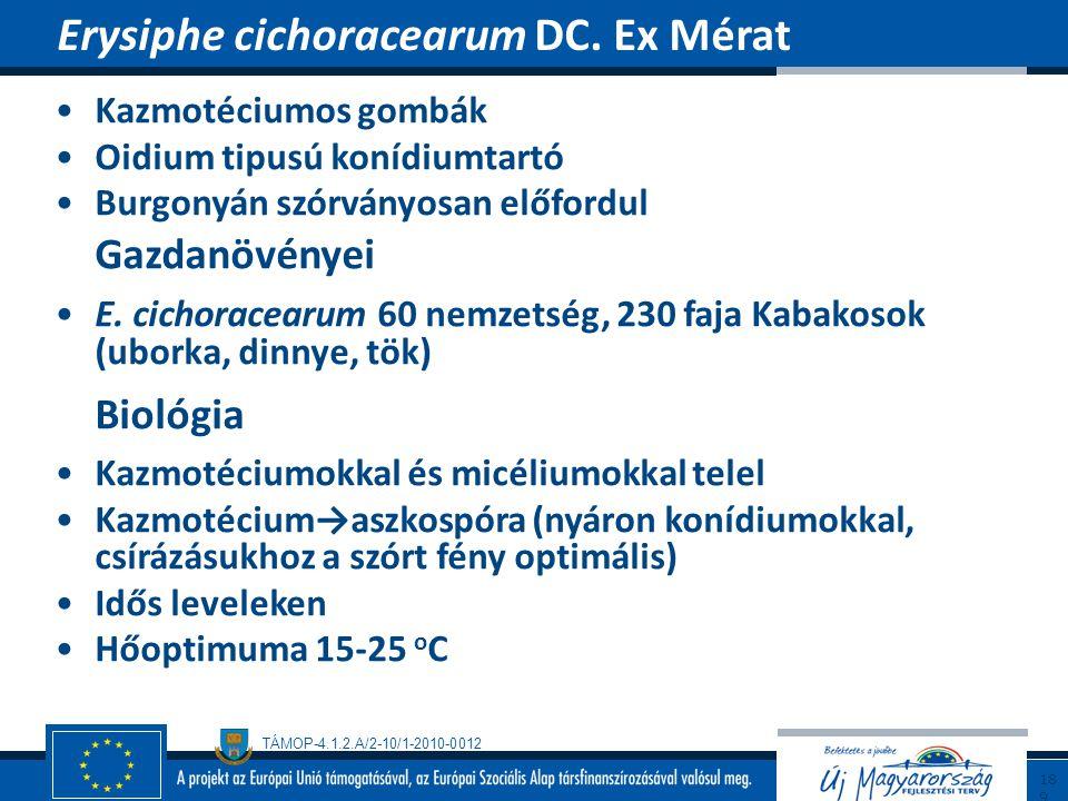 Erysiphe cichoracearum DC. Ex Mérat