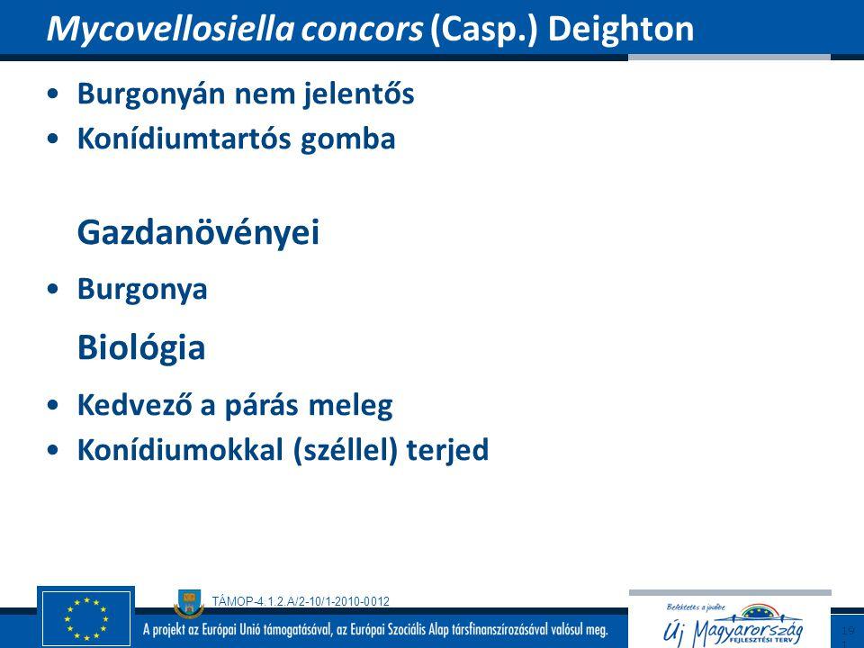 Mycovellosiella concors (Casp.) Deighton