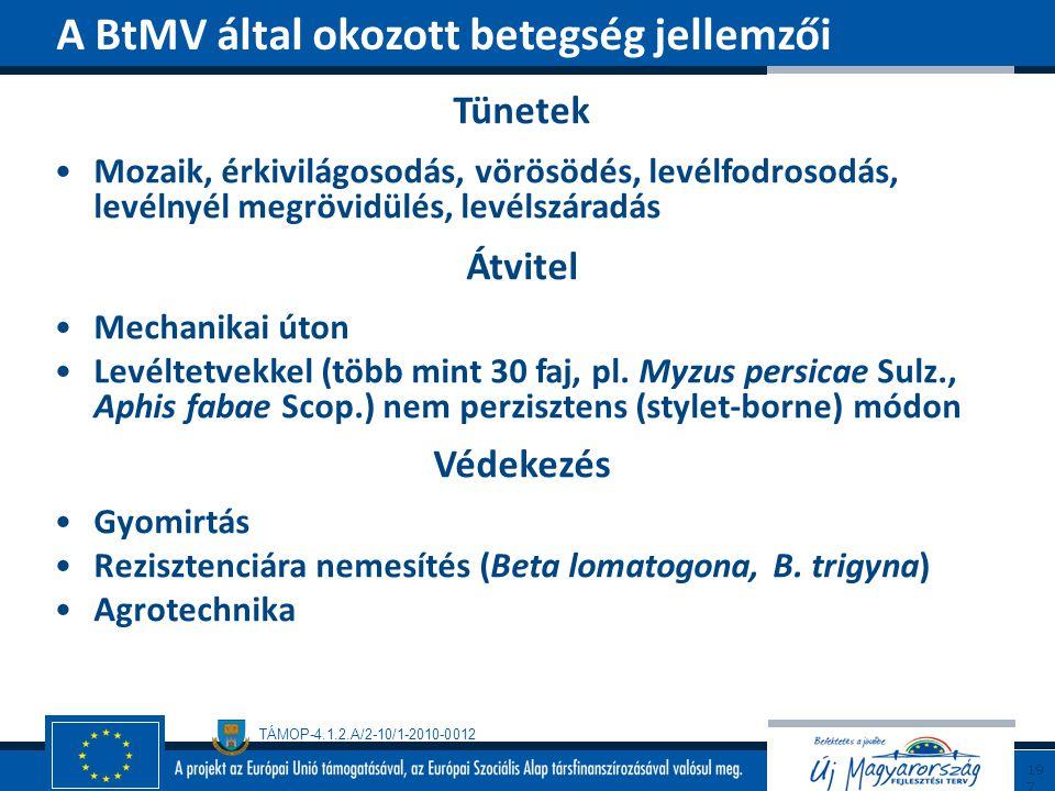 A BtMV által okozott betegség jellemzői